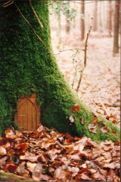 tree_door